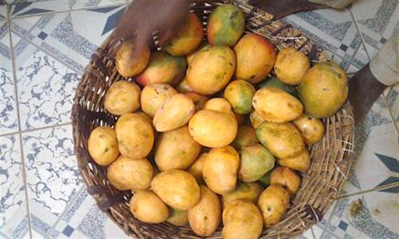 81 mangue