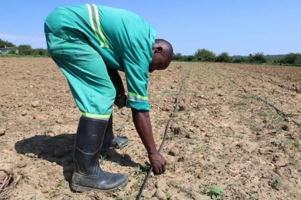 2drip irrigation farmer small