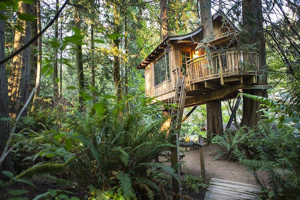 treetop cottage