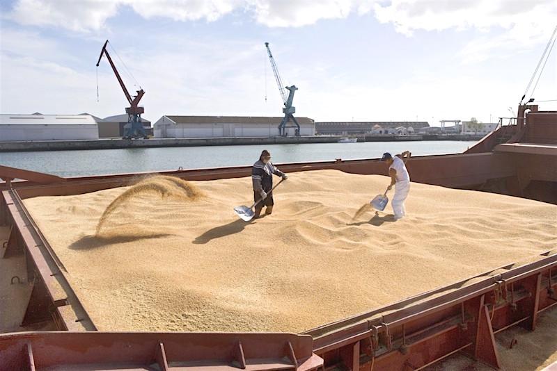 export blé