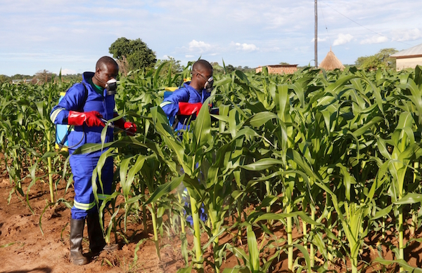 uganda africa fall armyworms invasion