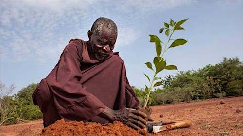 Yacouba Sawadogo plante