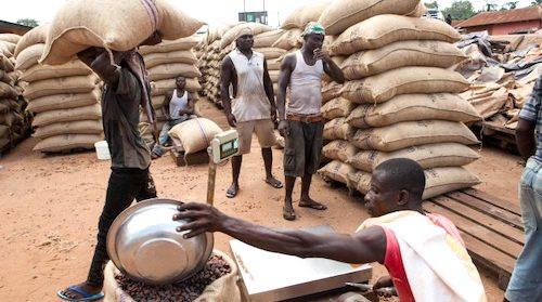 Le 2e producteur mondial de cacao.