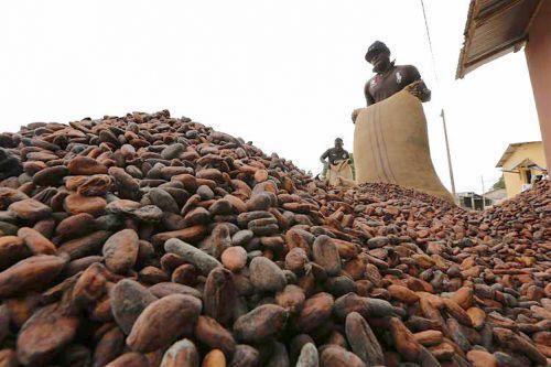 cacao cote divoire