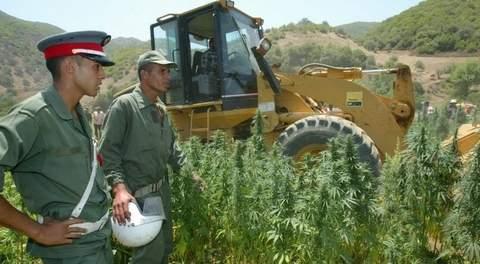 6cannabis maroc