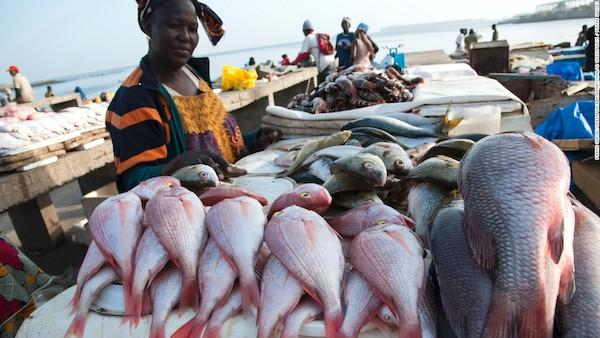 1fish market senegal super 169
